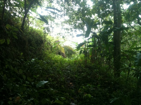The path to my jungle meditation retreat