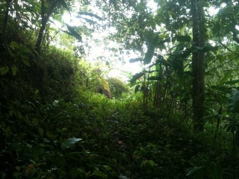 The path to my jungle meditation retreat